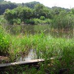 松戸「21世紀の森と広場」で 池の水ぜんぶ抜いた後はどうなっている!?